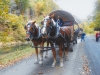 belgian-horses-covered-wagon