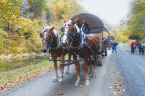 Belgian horses pulling covered wagon